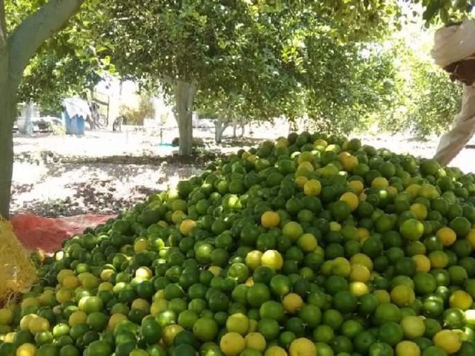 Millions of lemon crop lowest price | लाखोंचे लिंबू पीक कवडीमोल