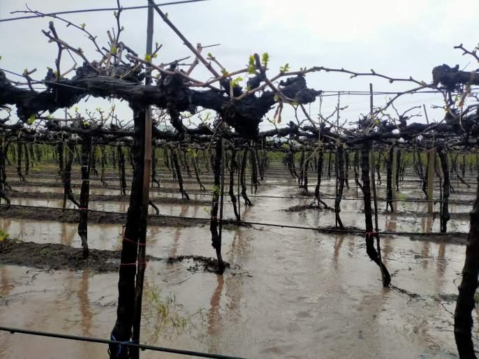 Khedgaon and Shindwad were hit by heavy rains   खेडगाव व शिंदवडला पावसाने झोडपलं पोगा अवस्थेतील बागा संकटात