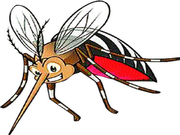 A total of 3 dengue patients a year | वर्षभरात डेंग्यूचे तब्बल ८०१ रुग्ण