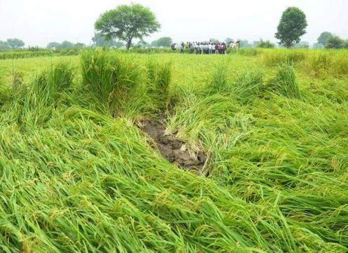Seven hundred and fifty farmers hit by return rains in Wardha district | वर्धा जिल्ह्यात परतीच्या पावसाचा साडेसातशे शेतकऱ्यांना फटका