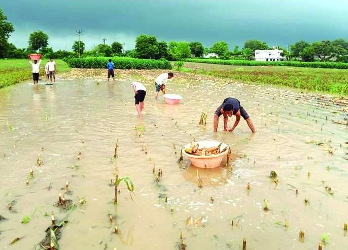 Use the 'CM War Room' for a photo Panchanam of crop damage! | पीक नुकसानाच्या फोटो पंचनाम्यासाठी 'सीएम वॉर रुम' कामाला लावा!