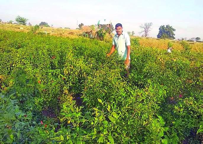 Jawana became a farmer and flourished   जवानाने किसान बनून फुलविली नफ्याची शेती