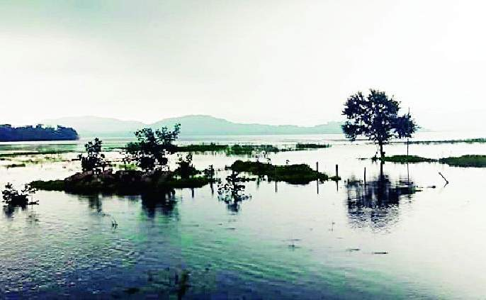 The risk of poisoning due to excessive beads in the lake | तलावातील अतिक्र मणांमुळे विषबाधेचा धोका