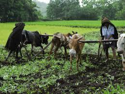 Farmers' Day celebrated at Satali   साताळी येथे शेतकरी दिन साजरा