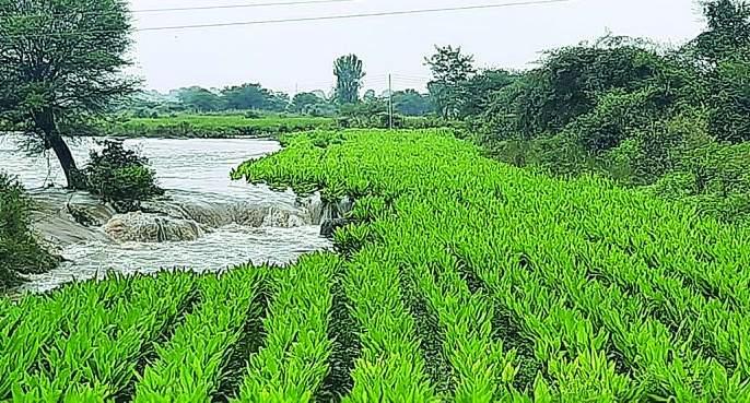 10 villages not contacted due to floods | पैनगंगेच्या पुरामुळे तुटला १० गावांचा संपर्क!