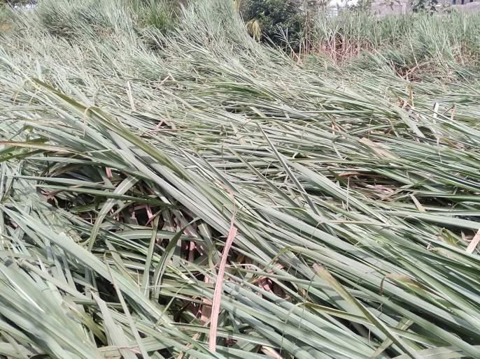 When will MyBap government come to power, farmers cry out | मायबाप सरकार बांधावर कधी येणार, शेतकऱ्यांची आर्तहाक