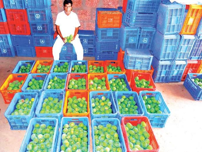 There are no customers to buy mangoes in Devgad, ornamental stalls   corona virus-देवगडात आंबा खरेदीसाठी ग्राहकच नाहीत, उभारलेले स्टॉल ठरताहेत शोभेचे
