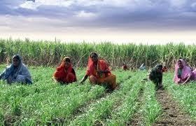 Rain exposure, speed up farming   पावसाची उघडीप, शेतकामांना वेग