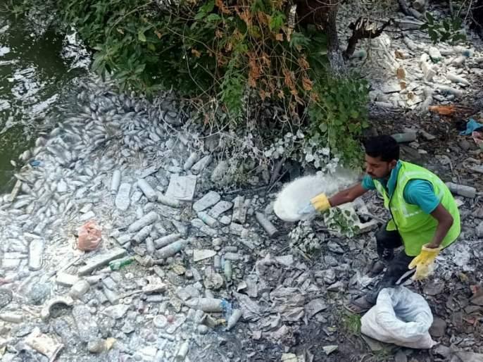 Dead fish in a black mine in Sangli | सांगलीतील काळ्या खणीत मृत माशांचा खच