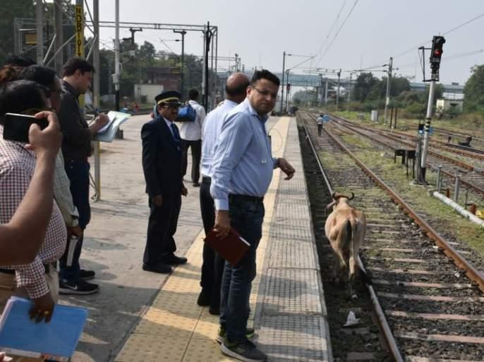 Mokat cattle drove on track during DRM surveillance | डीआरएम पहाणीवेळीच ट्रॅकवर फिरले मोकाट गुरे