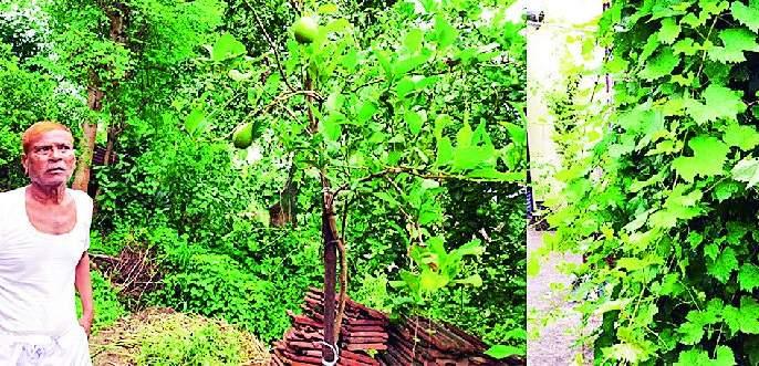 At the age of seventy, he started cultivating forest | सत्तरीच्या उंबरठ्यावर त्यांनी जोपासला वनसंवर्धनाचा वसा
