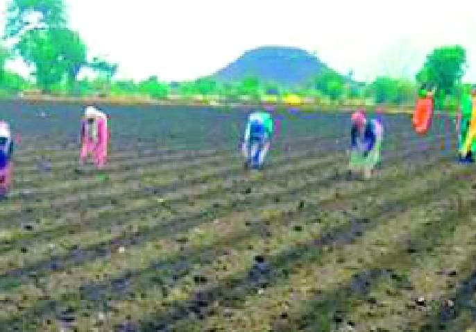 Farmers do not sow immediately | शेतकऱ्यांनो लगेच पेरणी करू नका