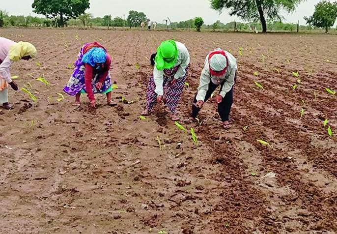 Accelerate inter-cultivation work in the district | जिल्ह्यात आंतर मशागतीच्या कामाला वेग