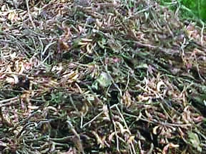 Women farmers unconscious after seeing soybeans loss | लोकमत बांधावर :सोयाबीनला कोंब पाहून महिला शेतकरी बेशुद्ध