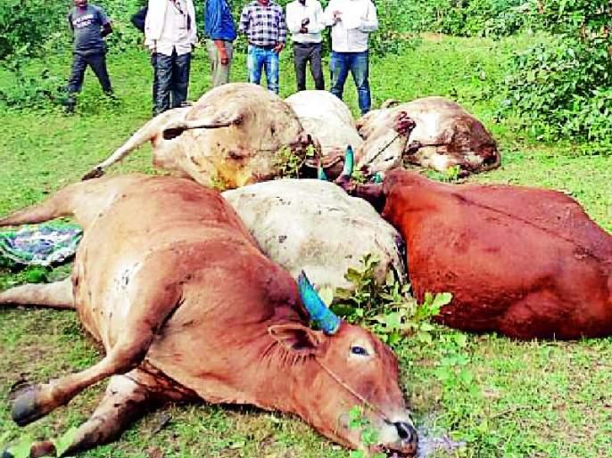 Over 18 animals killed in vehicle accident | वाहन उलटून १८ जनावरे ठार