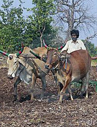 The sowing area will be doubled | रबीचे पेरणी क्षेत्र दुपटीने वाढणार
