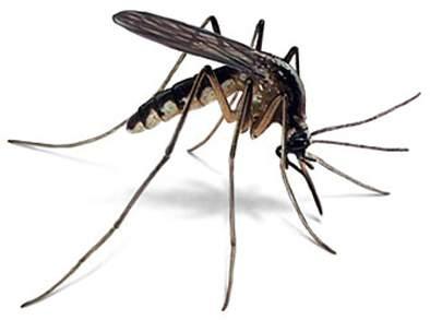 Dengue prevalence in Jalna district ... | जालना जिल्ह्यात डेंग्यूचा फैलाव...