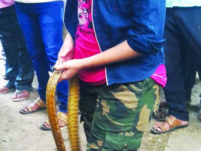 Daring and skill; Leaving snakes in nature gives snake-friendly beauty | धाडस अन् कौशल्य; सापांना निसर्गात सोडून सर्पमैत्रीण सौंदर्या देते जीवदान