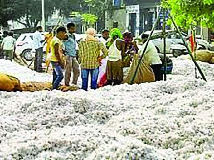 The official cotton purchasing started at Karanja | कारंजा येथे शासकीय कापूस खरेदी सुरू