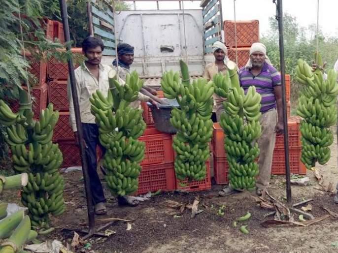 Twenty-five lakh income from banana garden; Pawanar farmer's courage | साडेचार एकर केळीच्या बागेतून बावीस लाखांचे उत्पन्न; पवनारच्या शेतकऱ्याचे धाडस