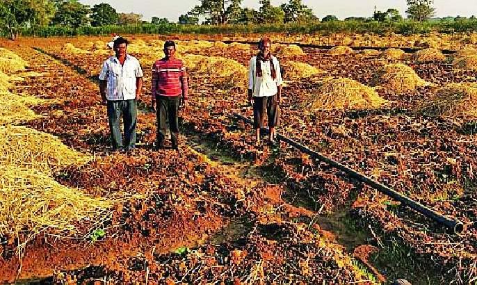 Farmers' attitude towards Carle crop | कारले पिकाकडे शेतकऱ्यांचा कल