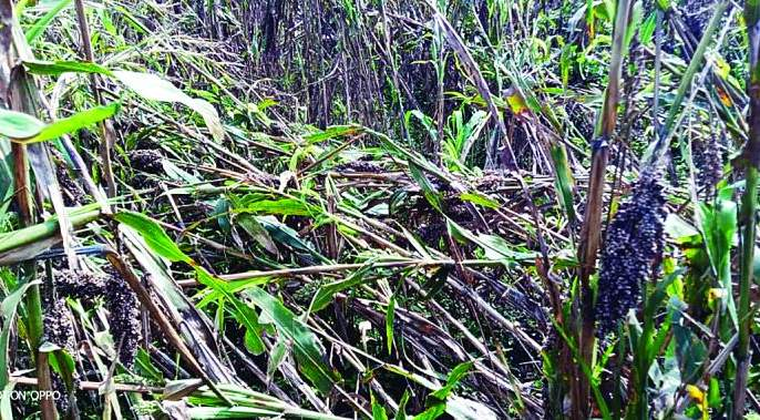 Final crop loss report on Monday | पीक नुकसानाचा अंतिम अहवाल सोमवारी