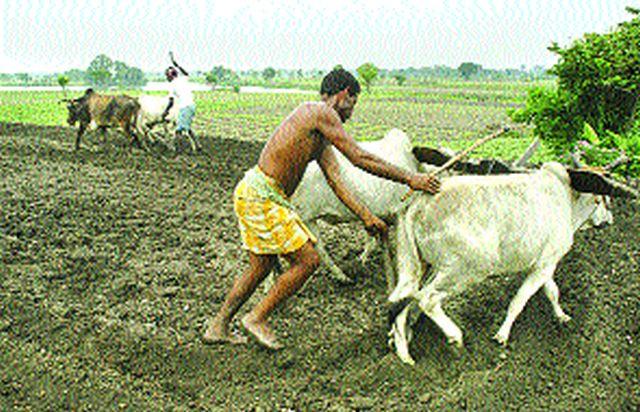 East part: increased cultivation | सिन्नरला रब्बी हंगामातील पिकांना मोठी पसंती