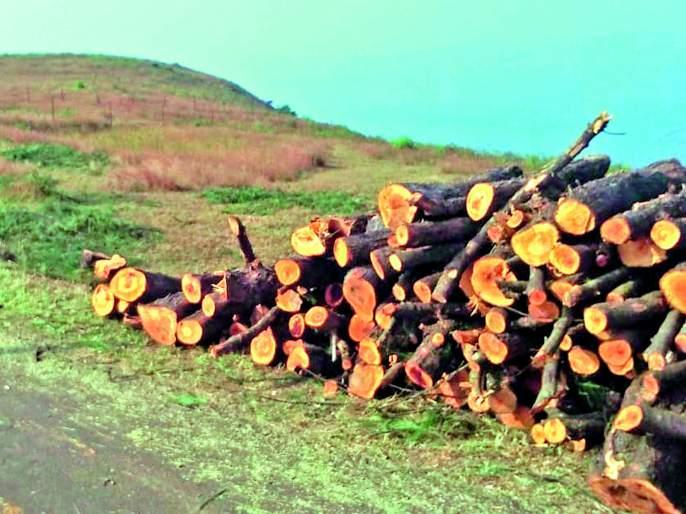 Growth ax wound at the root of the tree, the Satara-Kas road | विकासाच्या कुऱ्हाडीचा घाव झाडांच्या मुळावर, सातारा-कास रस्ता
