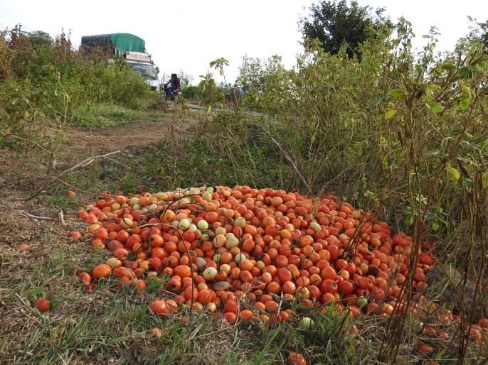 Five rupees per kg on tomato road | पाच रुपये किलो दर निघाल्याने टोमॅटो रस्त्यावर : उत्पादनाचा खर्चही निघेना; शेतकरी चिंतेत