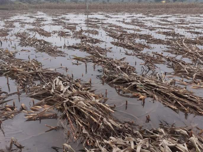 In Jalna district, 90 per cent of the losses were completed   जालना जिल्ह्यात नुकसानीचे ९७ टक्के पंचनामे पूर्ण