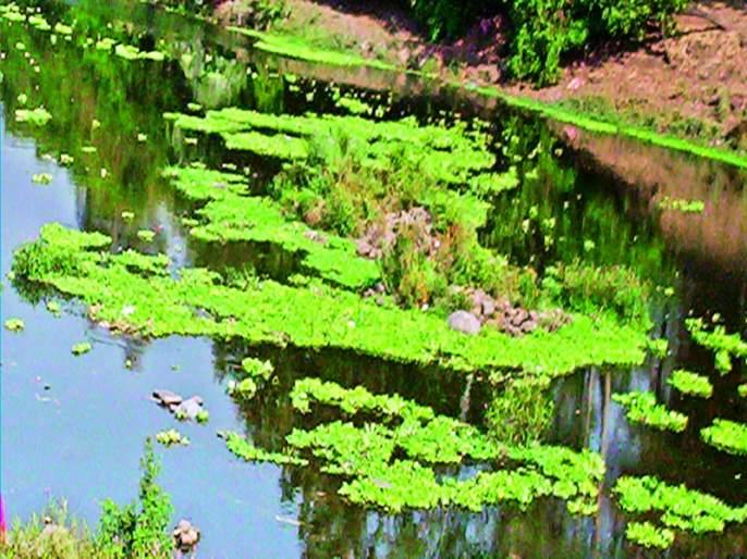 Pimpri city polluted Pavana river water audit on paper!   उद्योगनगरीतील प्रदूषित पवना नदीचे वॉटर ऑडिट कागदावरच!