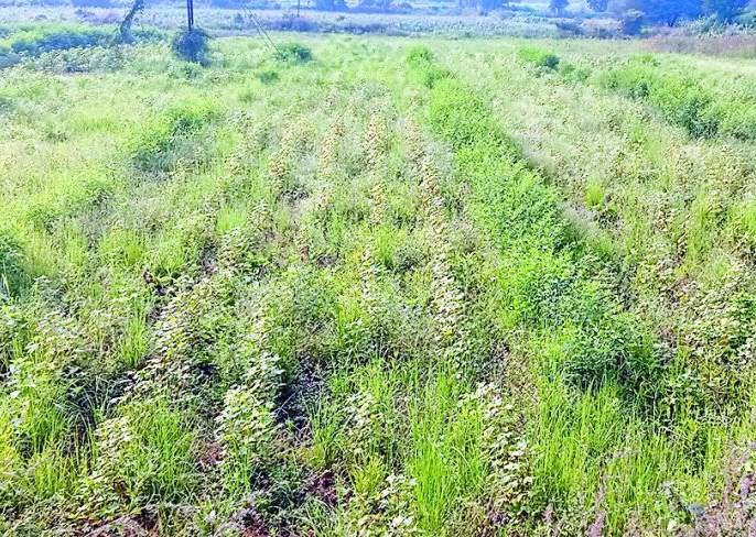 Farmers' planning for the Rabi season collapsed | शेतकऱ्यांचे रबी हंगामातील नियोजन कोलमडले