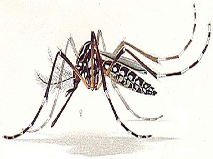 Comprehensive investigation into the city due to dengue outbreak | डेंग्युच्या प्रकोपामुळे शहरात व्यापक तपासणी