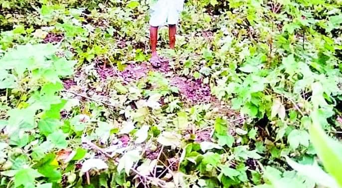 Farmers under Tipeshwar Sanctuary are desperate | टिपेश्वर अभयारण्यालगतचे शेतकरी हतबल