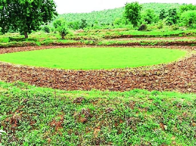 Rana in the district is only four percent | जिल्ह्यात भात रोवणी केवळ चार टक्के