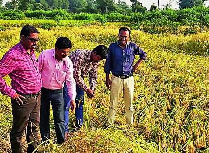 Damage to crops on 17 thousand hectares | १७ हजार हेक्टरवरील पिकांचे नुकसान