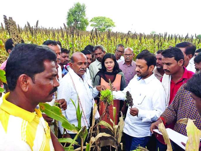 Crop loss survey completed in Shegaon taluka   शेगाव तालुक्यात पीक नुकसानाचा सर्व्हे पूर्ण