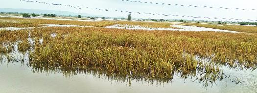 Lakh farmers lose 5 crores in Mayapur | महापुरात ३ लाख शेतकऱ्यांचे १३०० कोटींचे नुकसान