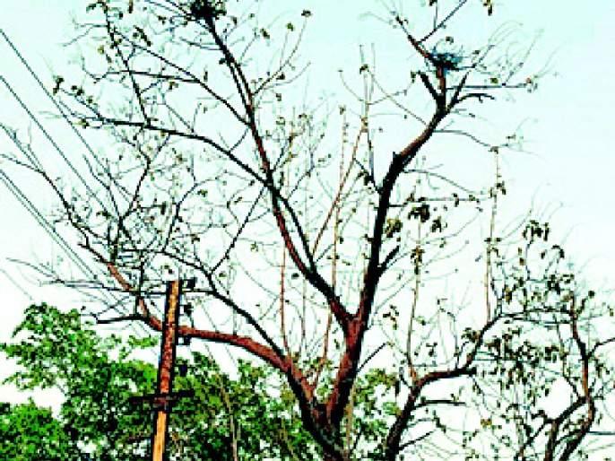 Less rain signs given by Kavalis nests | कावळ्यांच्या घरट्यांनी दिले कमी पावसाचे संकेत