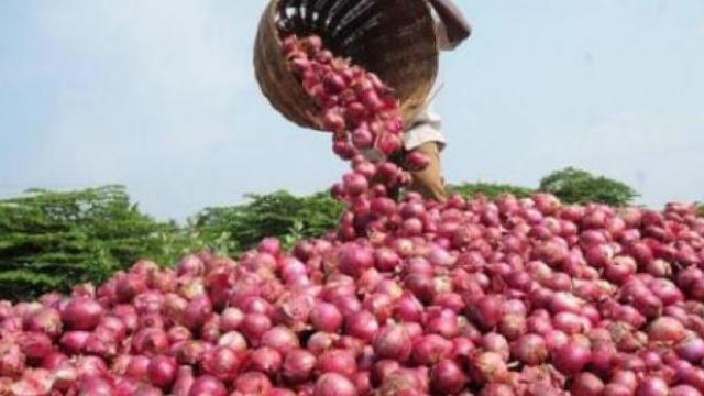 Onion seeds became expensive | कांदा बियाणे महागले
