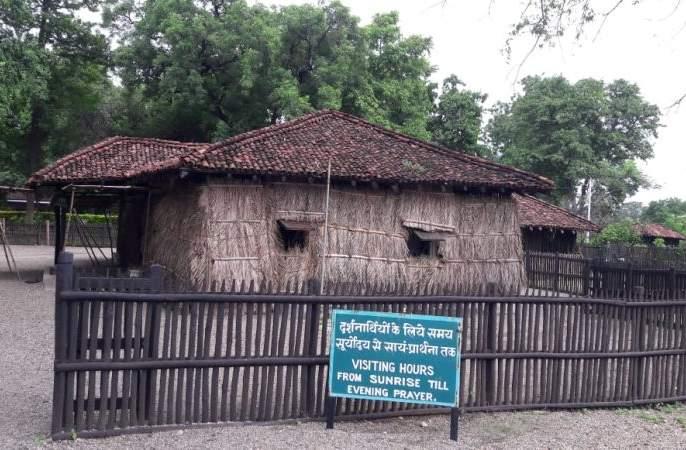 Shindole trees became rare in the ashram hut in Sevagram   सेवाग्राममधील आश्रमातल्या कुटींना शाकारणारे शिंदोल्यांचे झाड झाले दुर्मिळ
