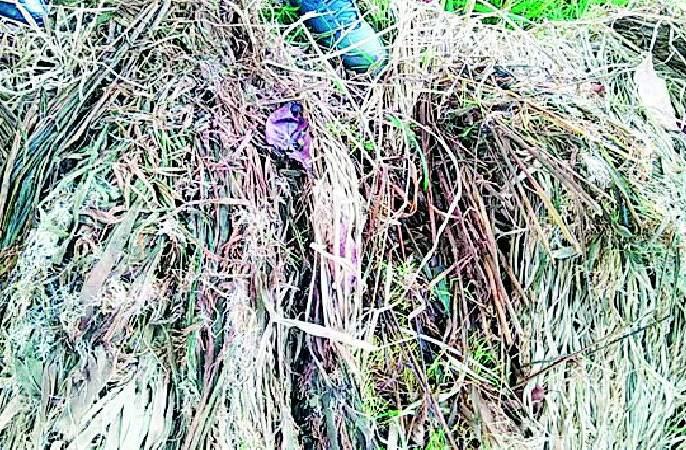 Returns rains affect paddy in 19 thousand hectares | परतीच्या पावसाने १९ हजार हेक्टरमधील धानपीक बाधित