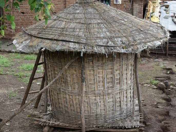 Satpudya's rising distance from 'bamboo' | सातपुडय़ाचा 'बांबू'पासून वाढता दुरावा
