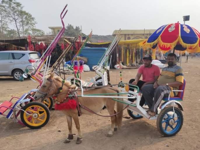 Horse-lovers crowded in the Sarangkheeda horses market   सारंगखेड्याच्या घोडे बाजारात अश्वप्रेमींची गर्दी
