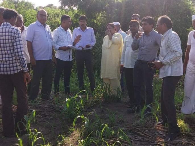 Bhadgaon tahsildar inspects the crops by smelly, mud | दुर्गंधी, चिखल तुडवत भडगाव तहसीलदारांनी केली पिकांची पाहणी