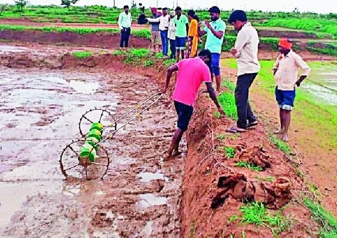 Sowing of paddy on mud by direct pedicider   डायरेक्ट पॅडीसिडरद्वारे चिखलावर धान पेरणी