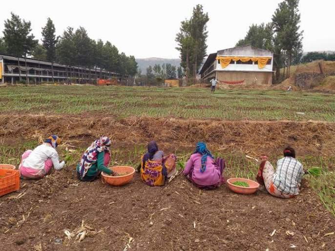 Onion cultivation in Khamkheda area | खामखेडा परिसरात कांदा लागवडीची लगबग