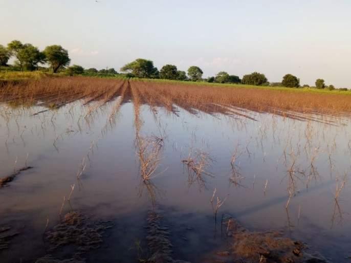 Two thousand hectares of crop water | दोन हजार हेक्टर पीक पाण्यात