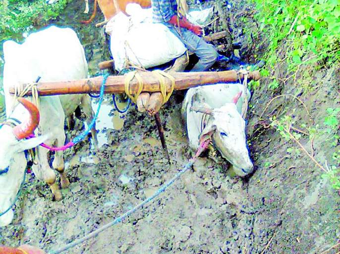 - | दैव बलवत्तर म्हणून वाचले शेतकऱ्यासह बैलांचे प्राण
