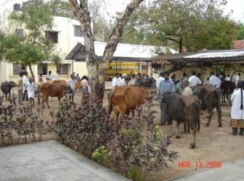 Provision of 52 veterinary dispensaries in the district | जिल्ह्यातील ५२ पशुवैद्यकीय दवाखान्यांची परवड